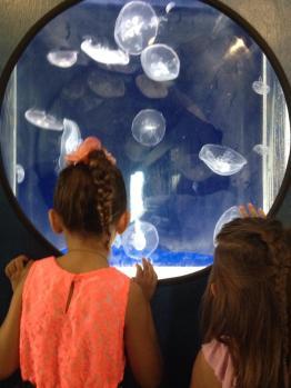 The SEA Lab aquarium